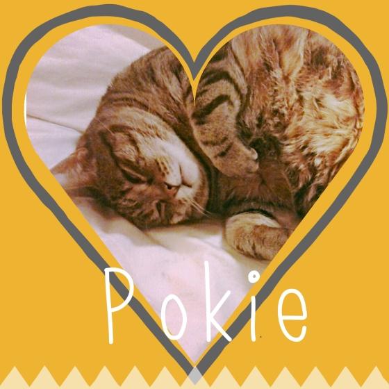 Pokie